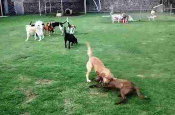 Residencias Caninas en Gernika Lumo 18