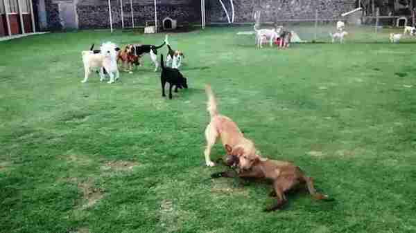 Residencias Caninas en Olves