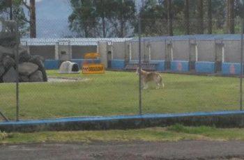 Residencias Caninas en Puendeluna 15