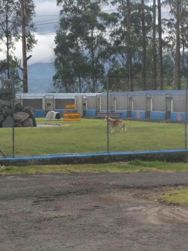 Residencias Caninas en Calzadilla
