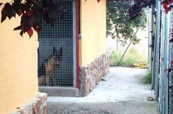 Residencias Caninas en Zarza Capilla 17