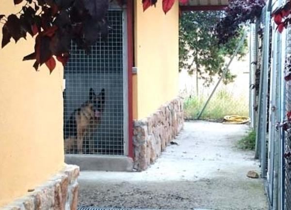 Residencias Caninas en Casarrubios del Monte
