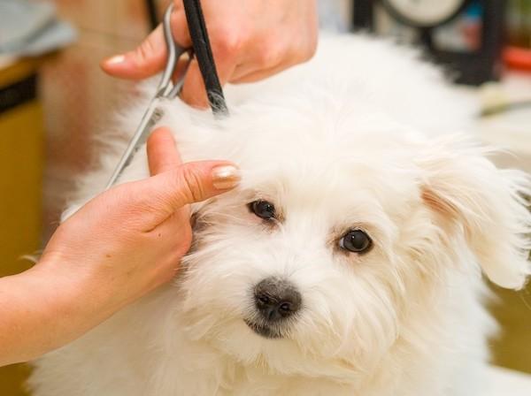 Residencias Caninas en Arres