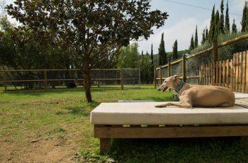 Residencias Caninas en Arrieta 5