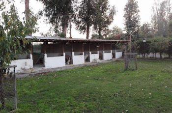Residencias Caninas en Castillo de Bayuela 4