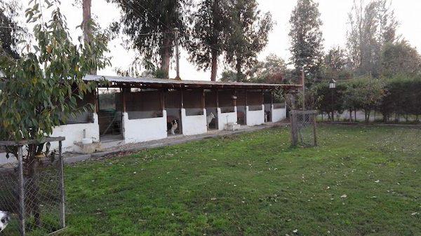 Las Mejores Residencias Caninas en Castillo de Bayuela