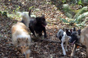 Residencias Caninas en Alcazar de San Juan 2