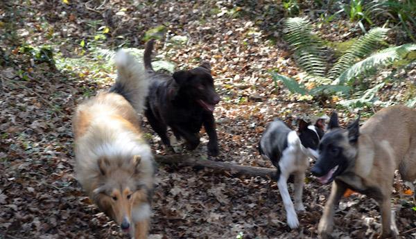 Residencias Caninas en El Robledo