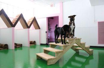 Residencias Caninas en Fuente el Olmo de Iscar 17
