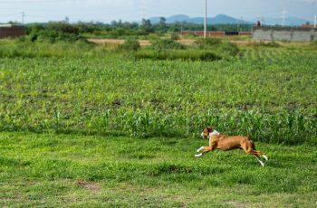 Residencias Caninas en Siruela 14