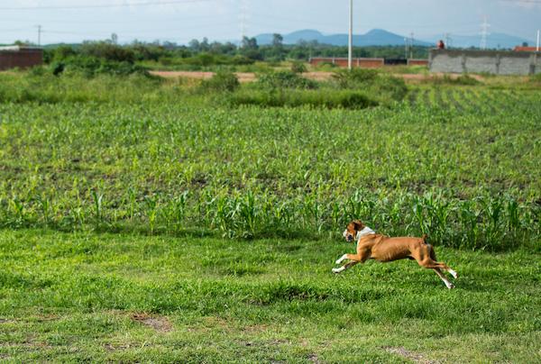 Residencias Caninas en Ereno