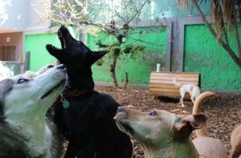 Residencias Caninas en San Munoz 17