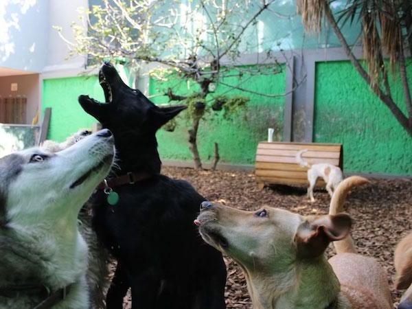 Residencias Caninas en Palacios de la Sierra