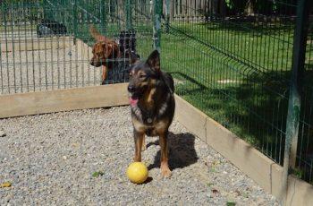 Residencias Caninas en Villel 15