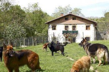 Residencias Caninas en Villalba de los Barros 18