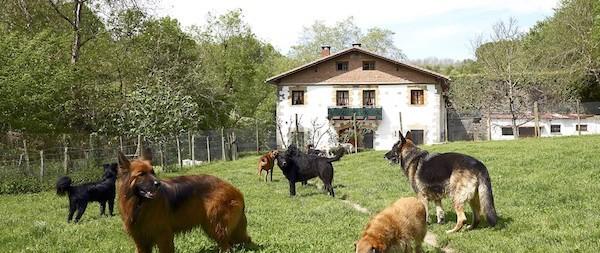 Residencias Caninas en Guadalmez