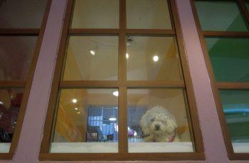 Residencias Caninas en Urda 5
