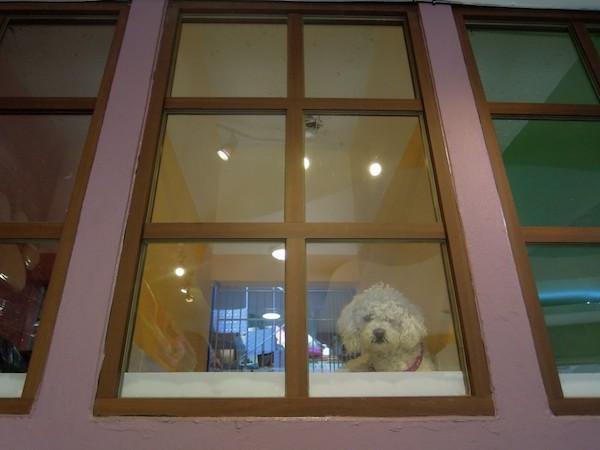 Residencias Caninas en La Torre de Esteban Hambran