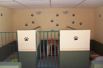 Residencias Caninas en Orellana la Vieja 6