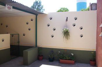 Residencias Caninas en Alamillo 2