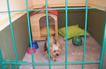 Residencias Caninas en Albero Bajo 17