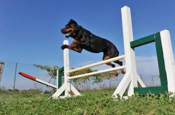 Residencias Caninas en Membibre de la Hoz 15