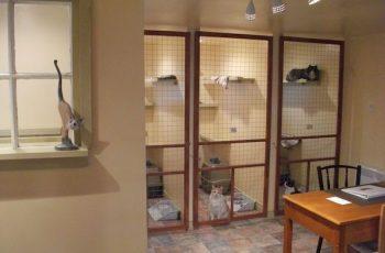 Residencias Caninas en Fuentemolinos 15