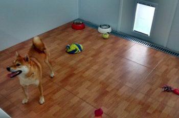 Residencias Caninas en Valverde de Merida 16