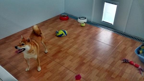 Residencias Caninas en Helechosa de los Montes