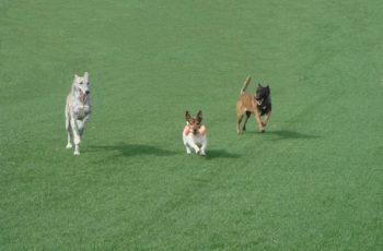 Residencias Caninas en Olmedillo de Roa 16