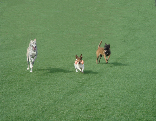 Residencias Caninas en Chia