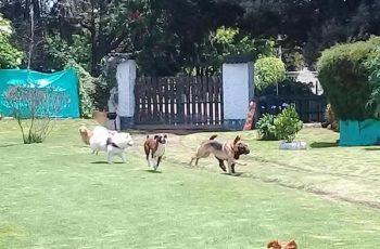 Residencias Caninas en Galdakao 19