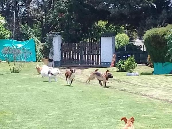 Residencias Caninas en Casbas de Huesca