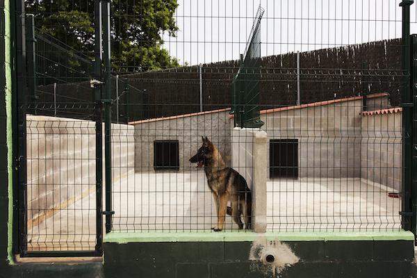 Las Mejores Residencias Caninas en Huerta de Rey