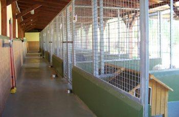Residencias Caninas en Velada 7
