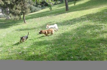 Residencias Caninas en Santa Maria del Monte de Cea 16