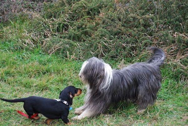 Las Mejores Residencias Caninas en Saucedilla