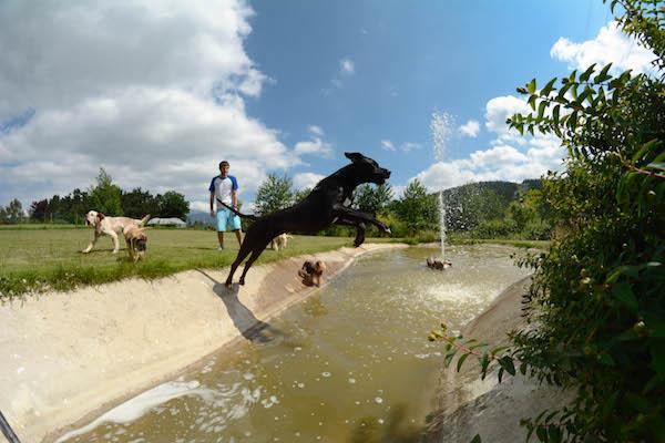 Las Mejores Residencias Caninas en Arroyomolinos de la Vera