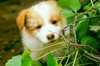 Residencias Caninas en Obon 7