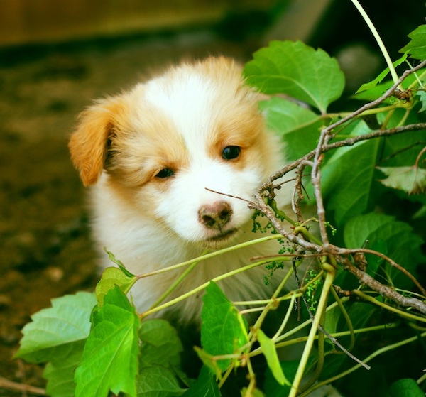 Residencias Caninas en Getxo