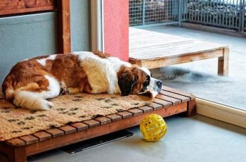 Residencias Caninas en Oliva de la Frontera 4
