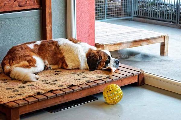 Las Mejores Residencias Caninas en Oliva de la Frontera