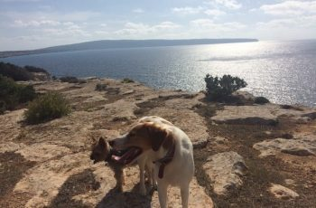 Residencias Caninas en Hinojosas de Calatrava 15