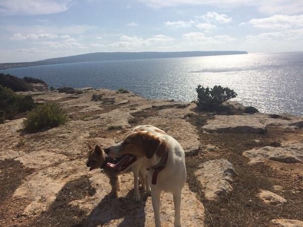 Residencias Caninas en Alcala de la Selva