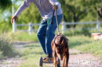 Residencias Caninas en Carrion de Calatrava 7