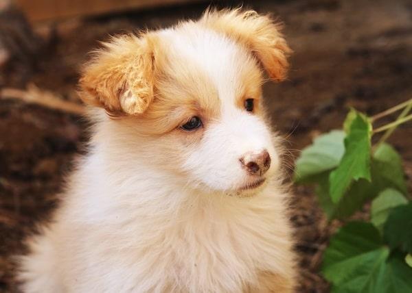 Las Mejores Residencias Caninas en Lerma