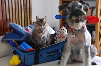 Residencias Caninas en Urrea de Jalon 18
