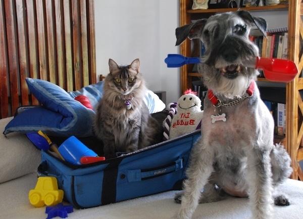 Las Mejores Residencias Caninas en Fuente de Cantos