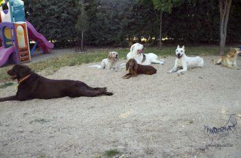 Residencias Caninas en Presencio 18