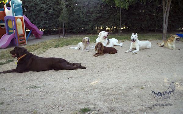 Residencias Caninas en Cortes de Aragon